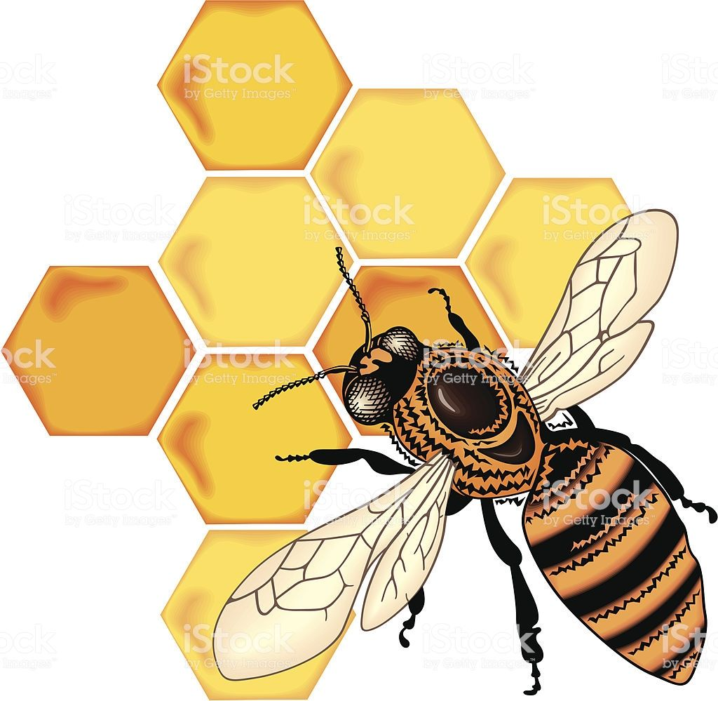 color bee vector is part of Honey bee drawing, Bee drawing, Honeybee art, Honey bee tattoo, Bee, Cartoon bee - color bee vector