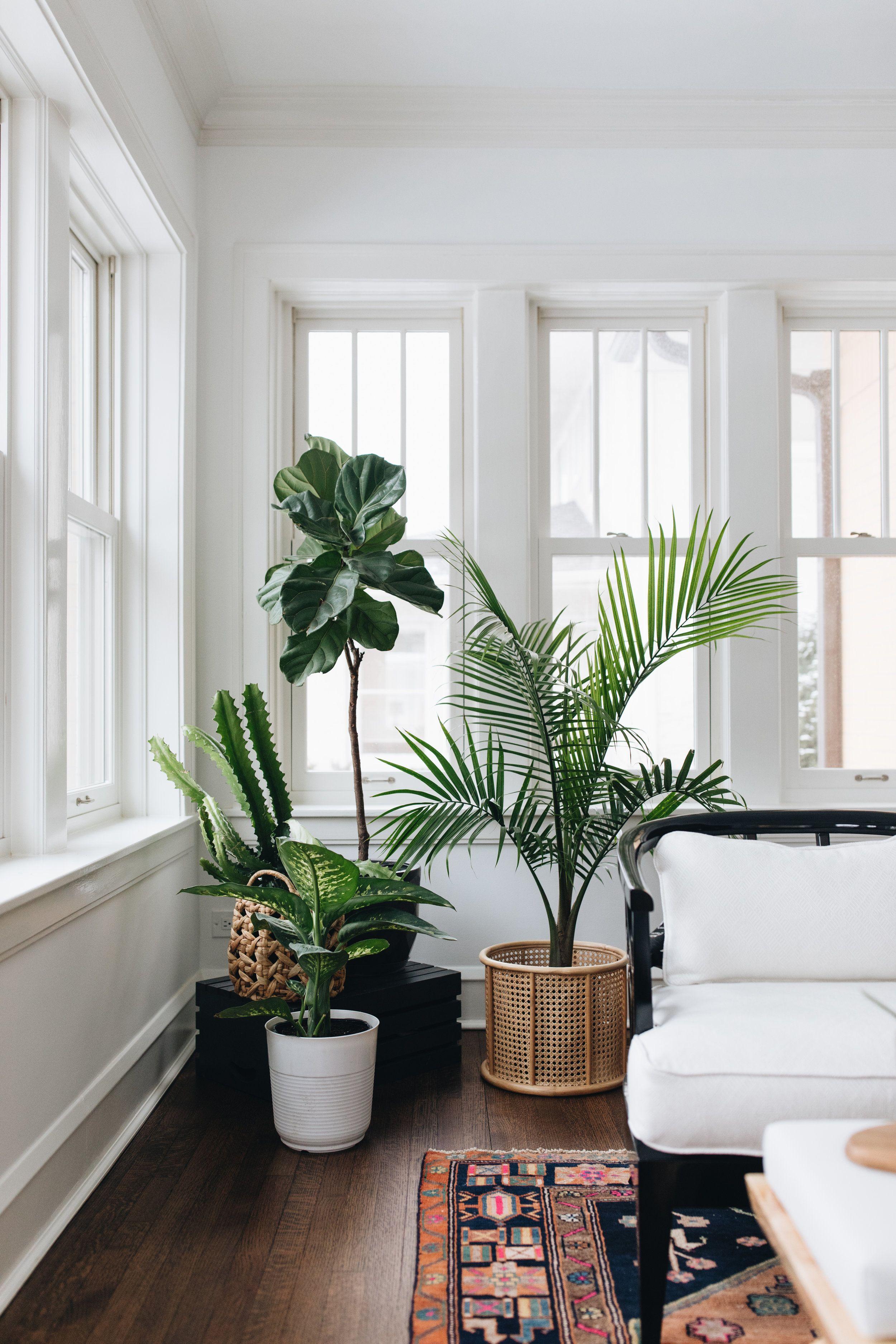 White Sunroom Green Plants Vintage Rug White Upholstery Minimalist Decor Minimalist Living Room Decor #white #minimalist #living #room