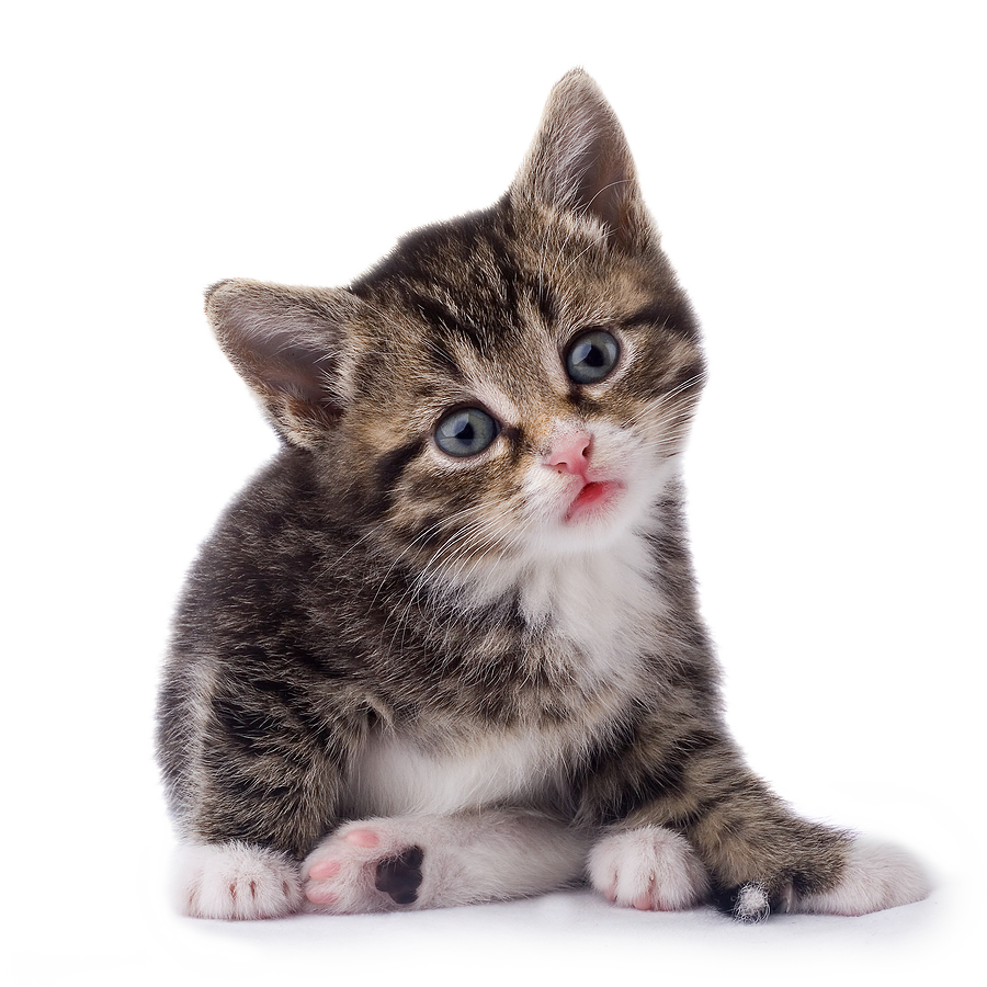 Black White Cat Png Png Image Crazy Cats Cats Cute Cats