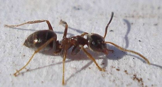Ameisen vertreiben ohne Gift - 10 natürliche Hausmittel für die - hausmittel gegen ameisen in der küche