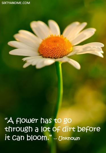 a flower has to go through a lot of dirt before it can