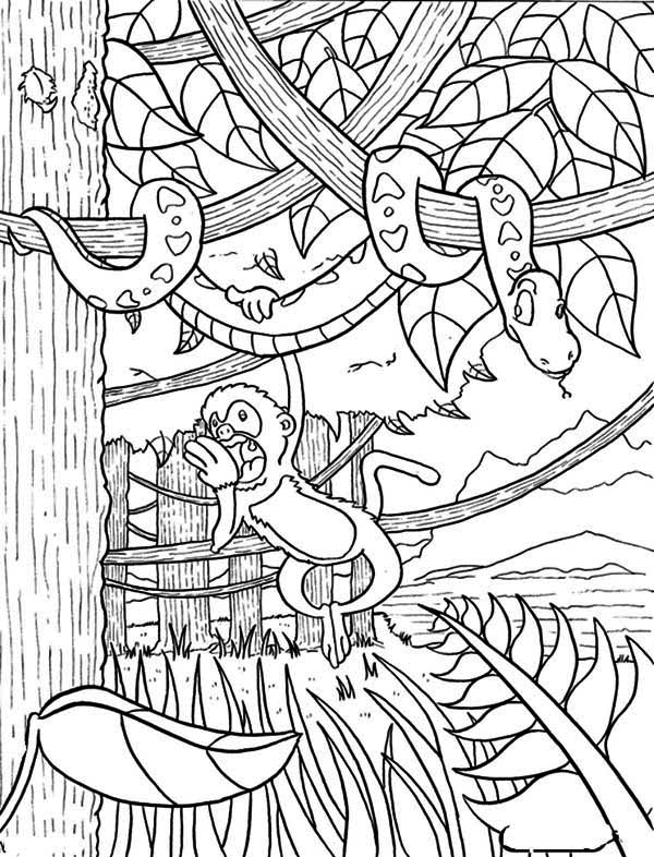 Monkey Hanging On Snake Rainforest Coloring Page Download Print Online Coloring Pages In 2020 Monkey Coloring Pages Animal Coloring Pages Printable Coloring Pages