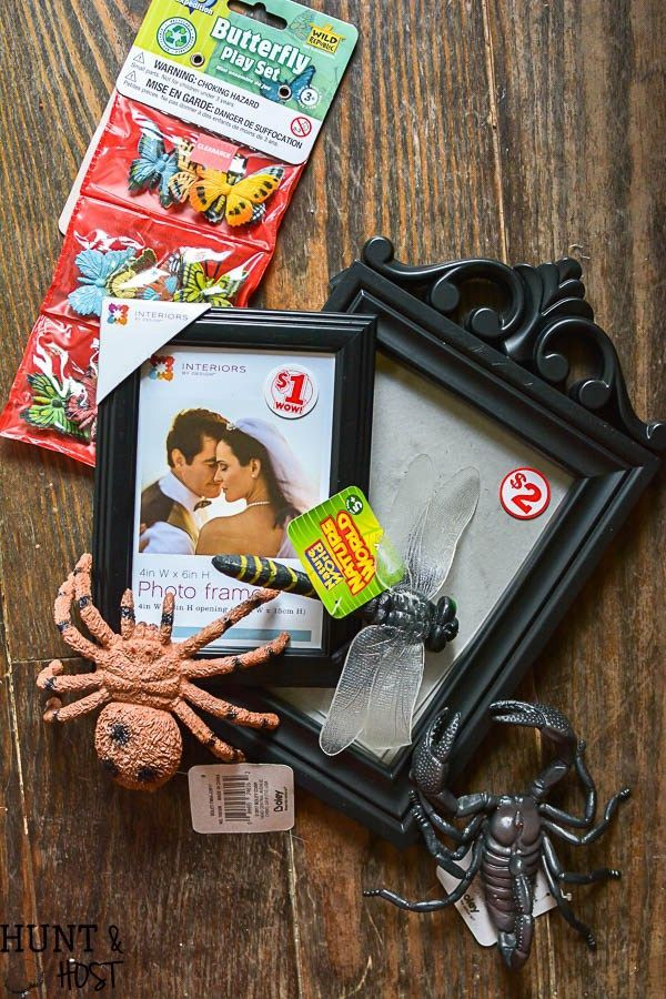 Catch how to make your own DIY gilded bug display case for Halloween - halloween decorations to make on your own
