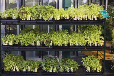 Plants Planting Herbs Plant Nursery
