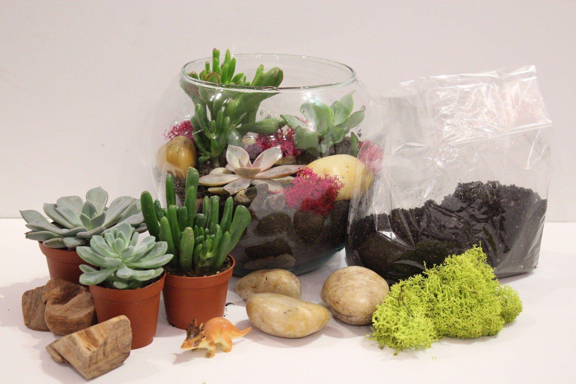 Diy succulent terrarium kit succulent terrarium diy