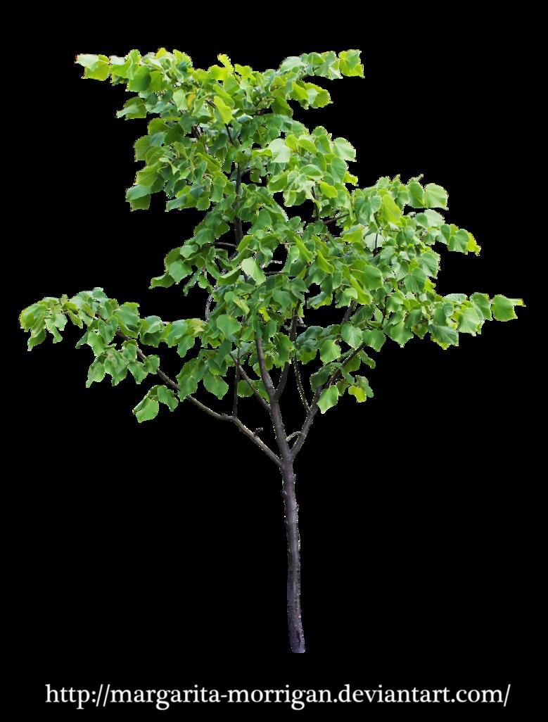 Small tree by margarita morrigan png plants pinterest for Short trees