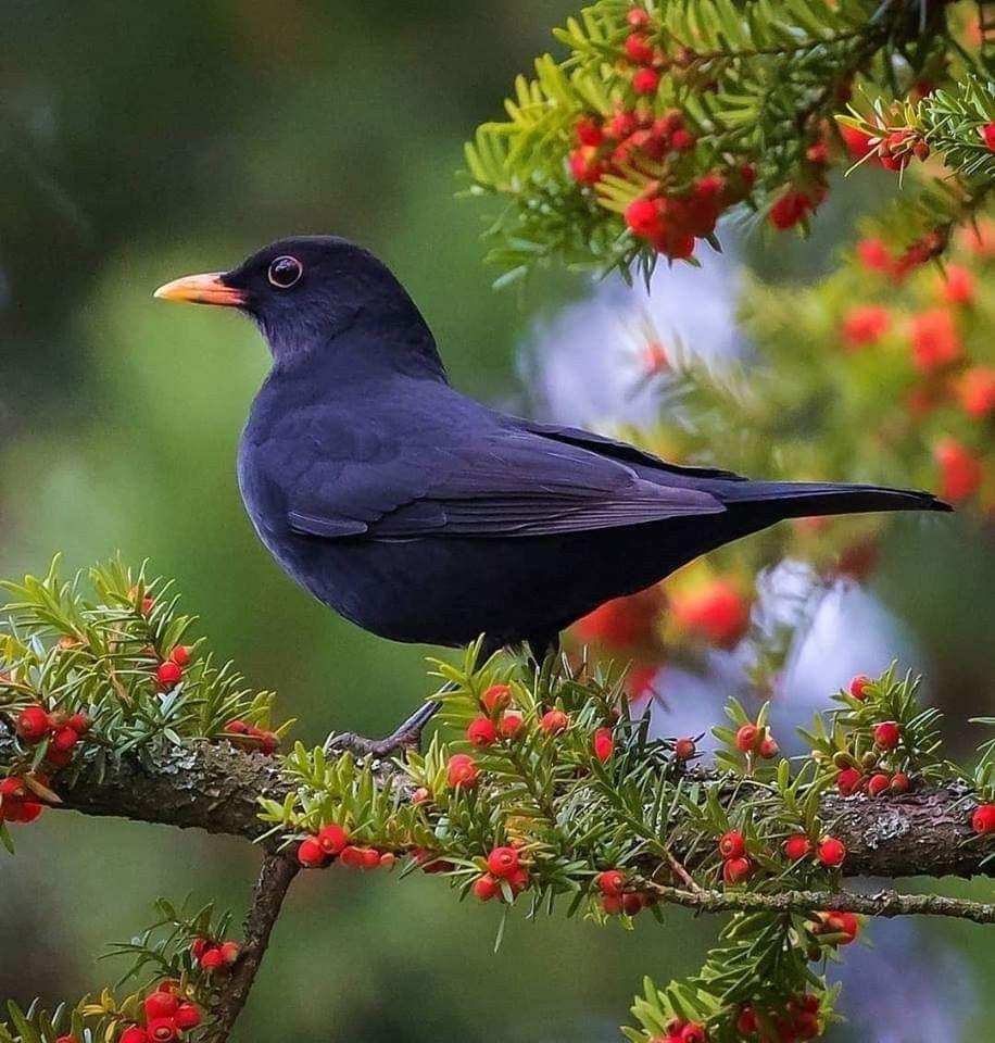 Pin By جمال الطبيعة On عالم العصافير والطيور Birds Bees Butterflies Beautiful Birds Pet Birds