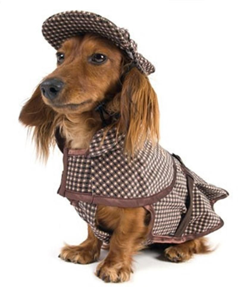 Calcium For Dogs Why Is It Important And How Can They Get More Dog Sweaters Dachshund Sweater Dog Clothes