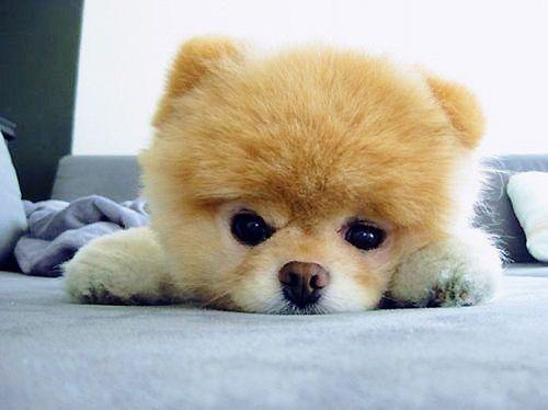 I am adorable !