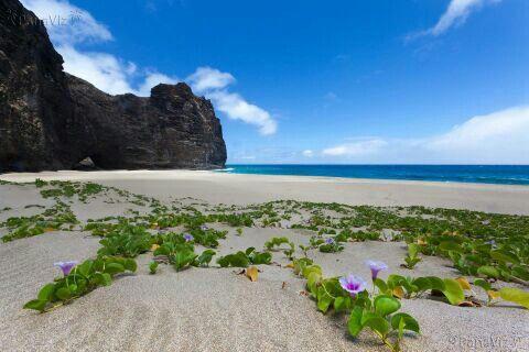 """Waikiki Hawaii """"2013"""""""