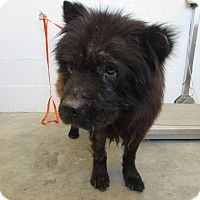 Chow Chow Mix Dog For Adoption In Corona California Kennel 22