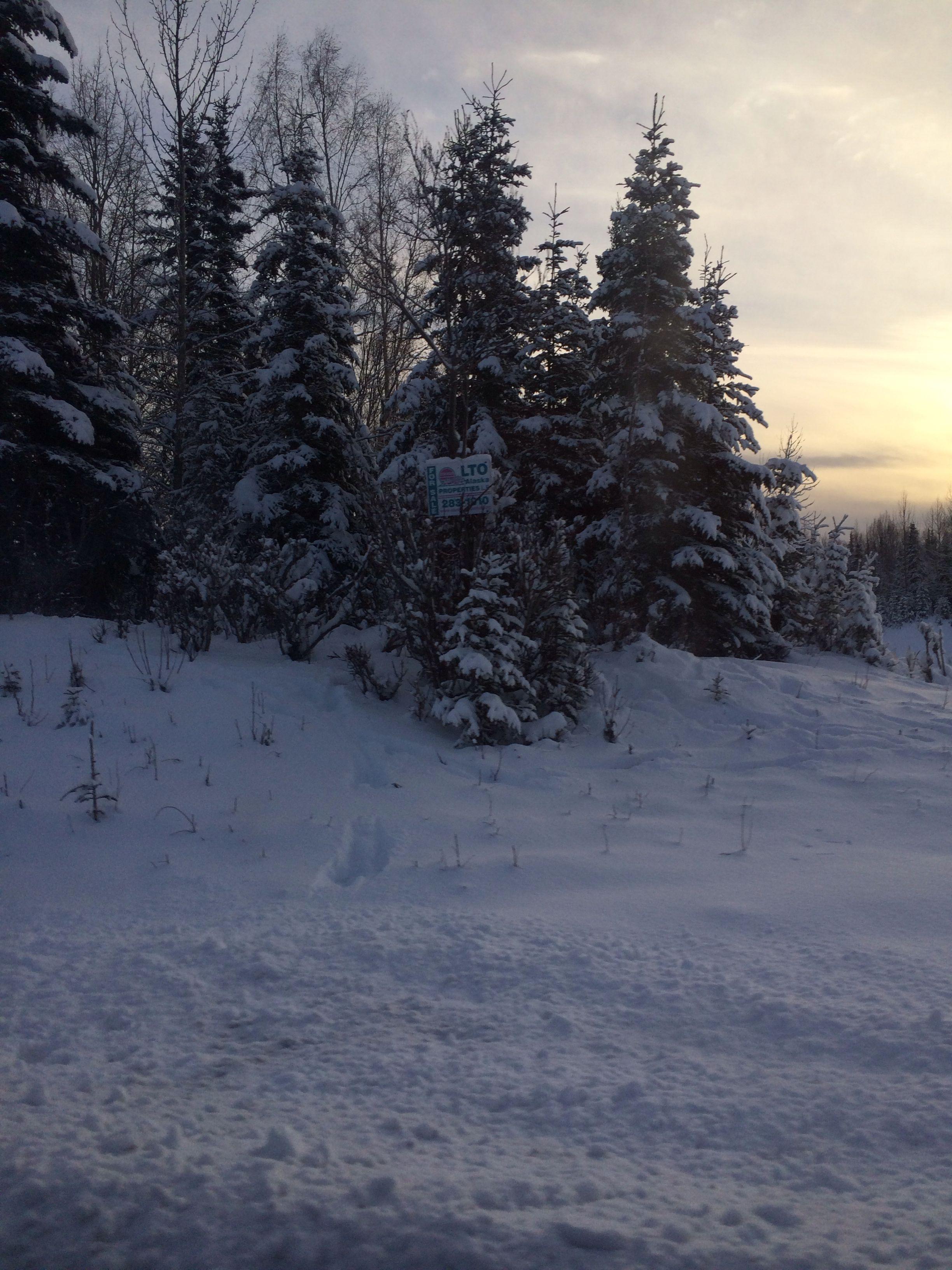 I love Alaska:)