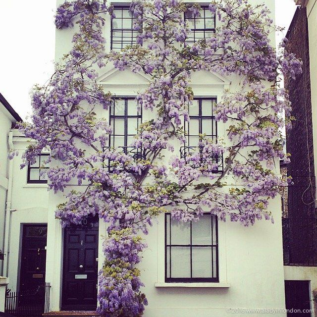 Exterior Color Inspired House with Wisteria in Kensington Farrow