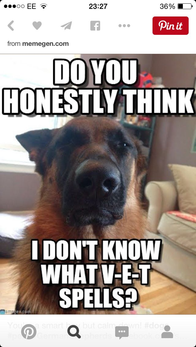 Some Dogs Understand A Huge Amount Of What We Say Dog Jokes