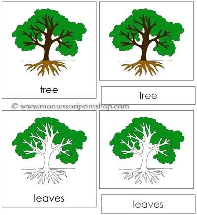 Tree Nomenclature Cards Printable Montessori For Learning At Home And School