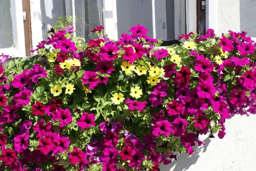 Pin By Mina On Kvetinove Balkony Container Gardening Window Boxes Plants