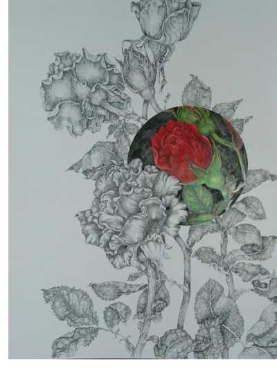 a rose bush drawing art pinterest rose bush rose and drawing art