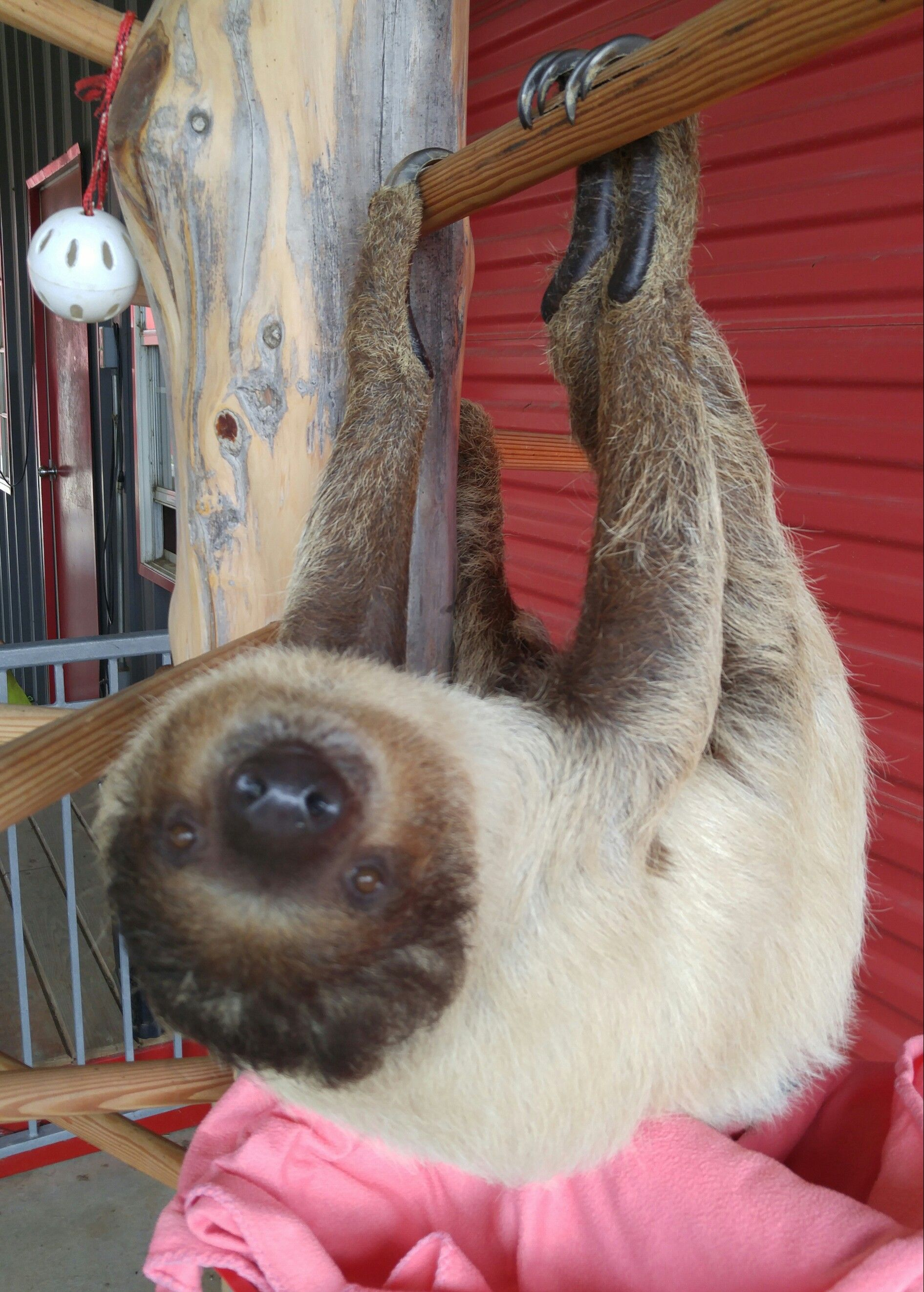 Aww just hanging around aww cute pictures pinterest dog