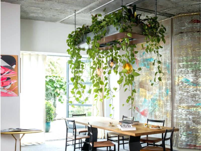 plants hanging from ceiling - Szukaj w Google | Interior ...