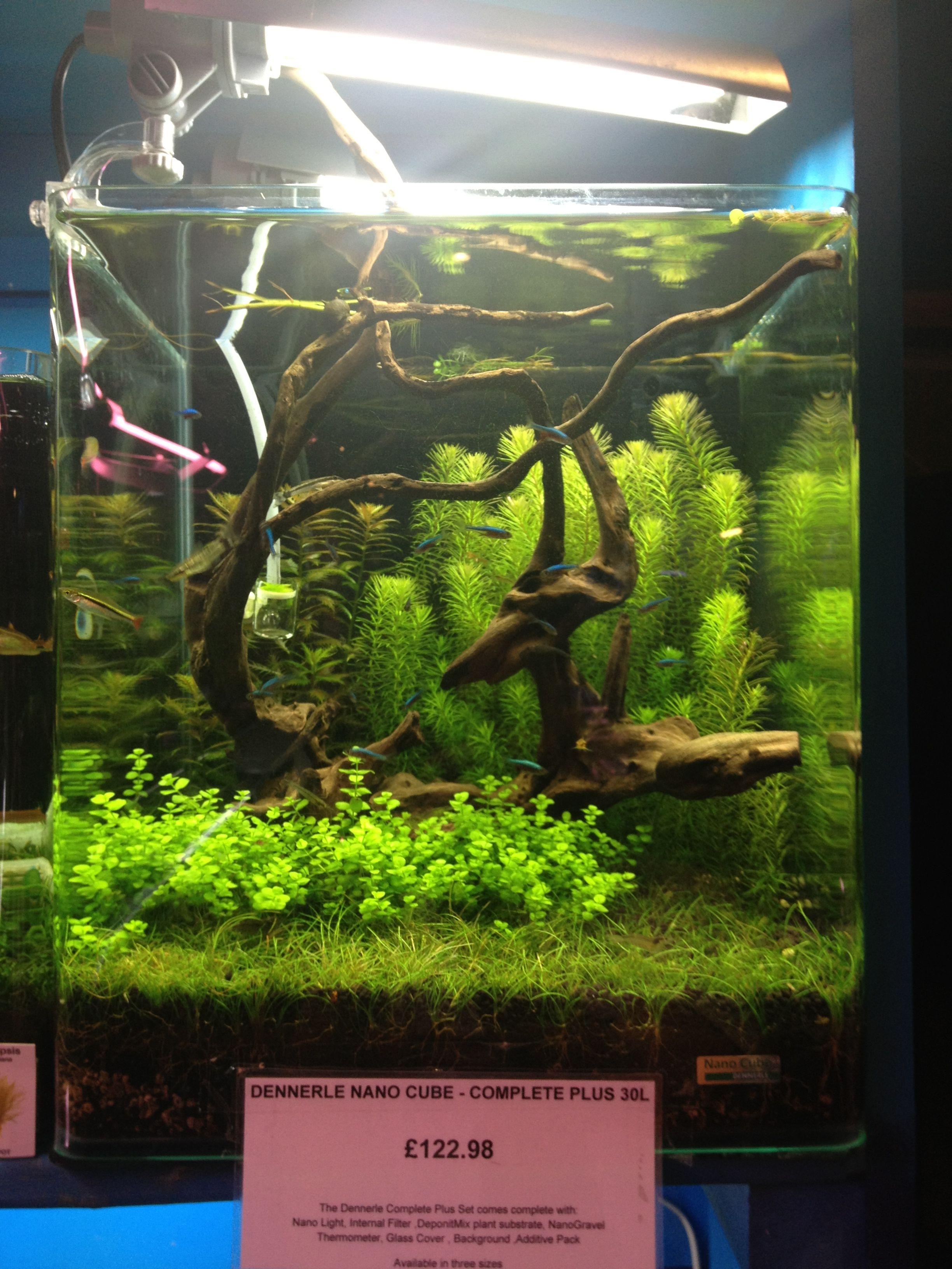 Nano Cube Aquarium Planted Aquarium Aquarium Nano Aquarium
