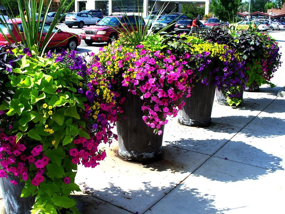 rock planters with beautiful plants and flowers perfect