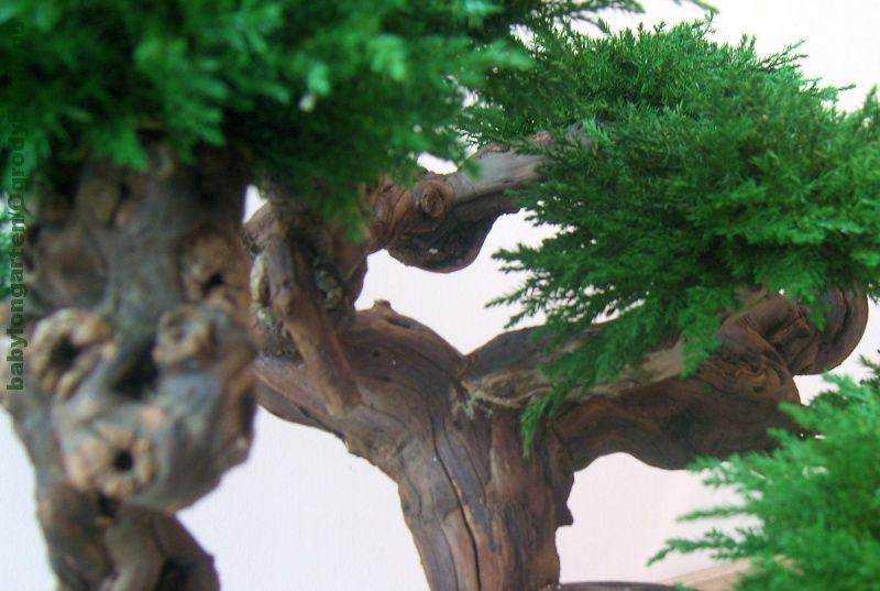 Galeria Zdjec Aukcji Allegro Bonsai Tree Artificial Plants Bonsai