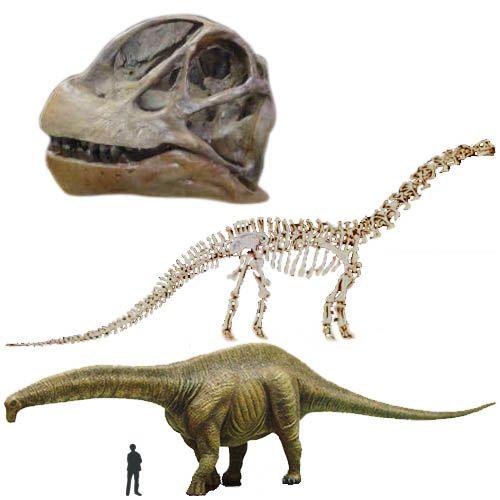 Brontosaurus/Apatosaurus