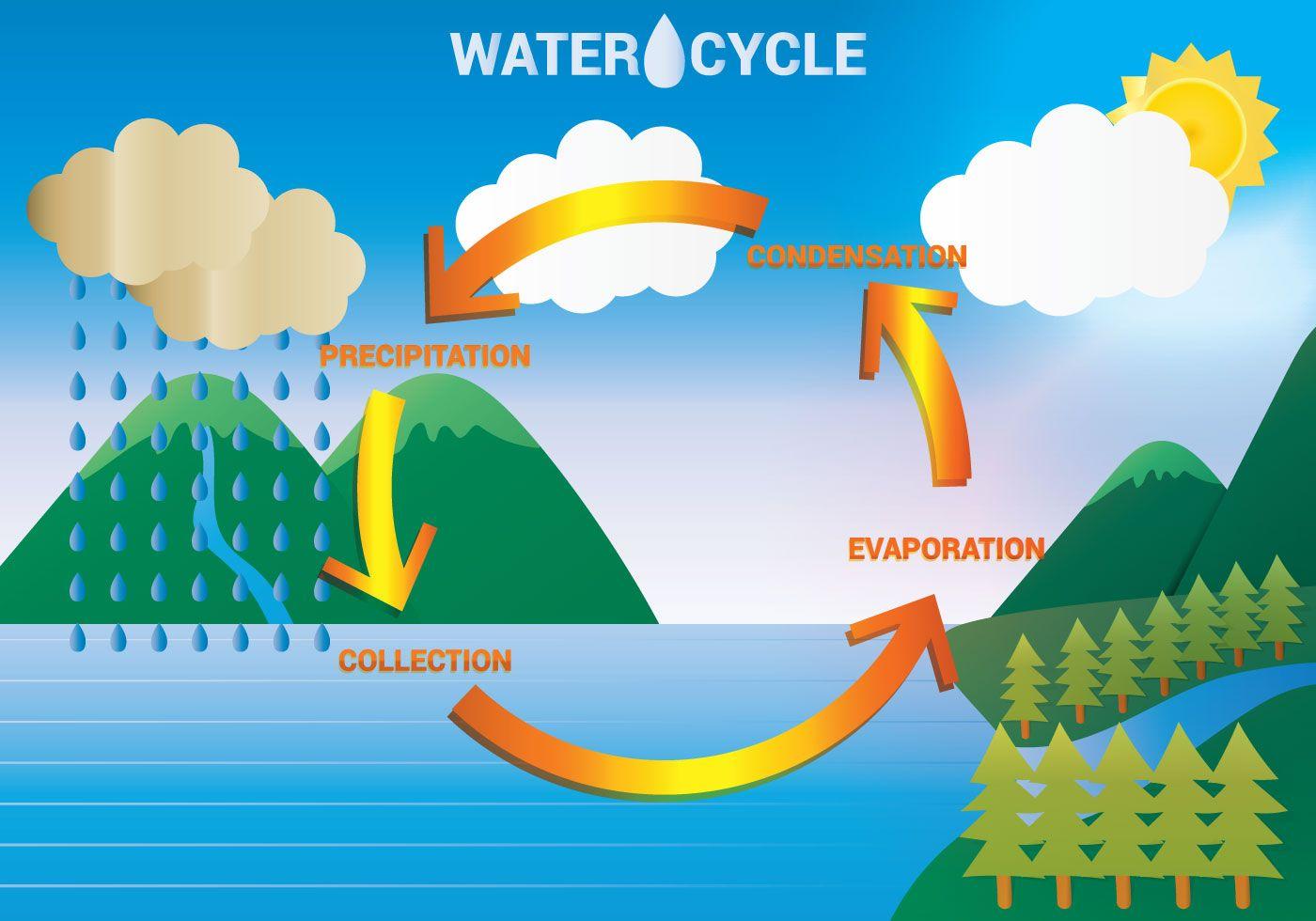 Water Cycle Diagram Vector Water Cycle Diagram Water Cycle