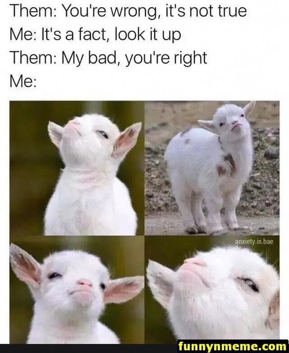 Latest Funny Clean 14 Clean and Funny Animal Memes 14 Clean and Funny Animal Memes 6