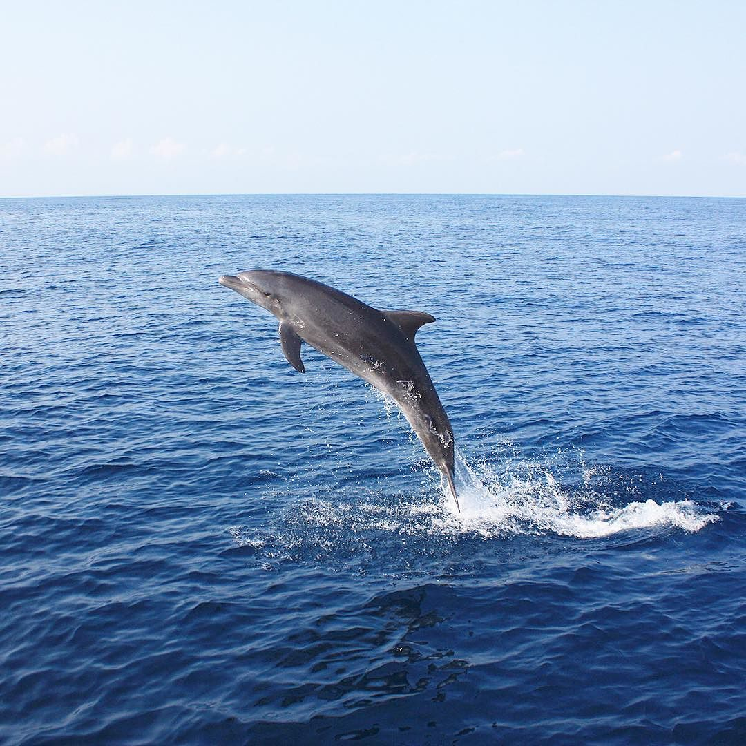 Alone on my boat  this solo dolphin came for a visit. We had one of the most magical moments I've ever had at sea! Still can't believe I got this shot  #dolphinlove #mermaiddiary #jumpingforjoy