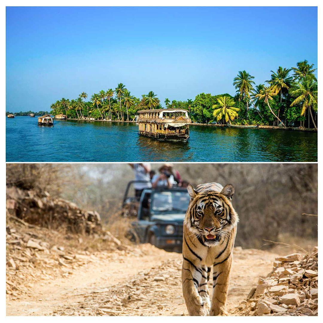 Plan a wonderful #destination for this vacation- Kerala Backwaters or Tiger Safari in #Ranthambore.  #ranthambore #incredibleindia #tour #indiatourism #tigersafari #wanderlove #travelingplanet #travelingworld #keralatourism #travelingislife #wanderfull #wanderlife #travel #wanderlife #wandertheworld #keralabackwaters #keralatourism #kerala #ranthamborenationalpark