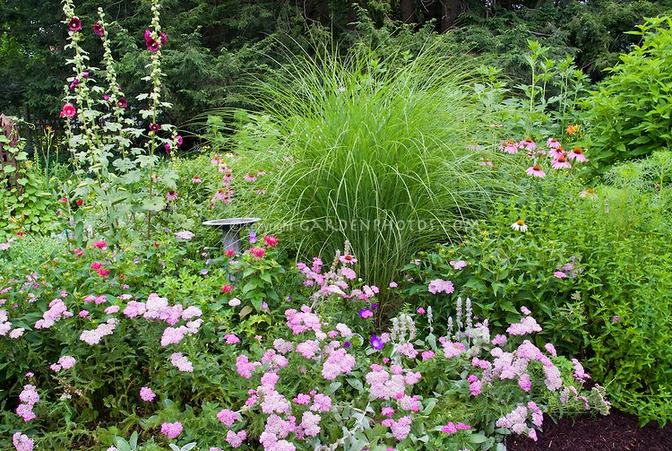 Island bed with miscanthus ornamental grass birdbath spiraea in island bed with miscanthus ornamental grass birdbath spiraea in pink flowers mulched next mightylinksfo