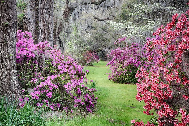 """""""Trail of Blooms"""" A hazy start of the day made for perfect"""