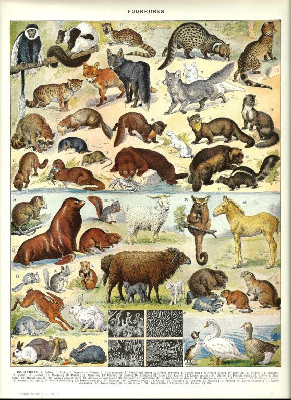 Fur Type Sheep Mink French Color Dictionary By Foliedujour On Etsy 13 50 Wildlife Prints Animals French Colors