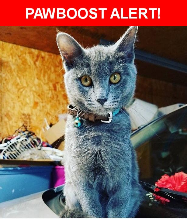 Please spread the word! Kitty was last seen in Kodak, TN 37764.    Nearest Address: Near Kentwood Drive, Kodak, TN, United States