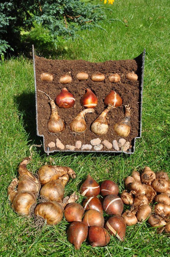 Sadzimy Rosliny Cebulowe W Donicach Outdoor Garden Bench Garden Trees Bulb Flowers