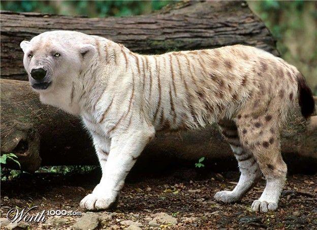 Chimaera 4 Worth1000 Contests Pet Tiger Baby White Tiger White Tiger