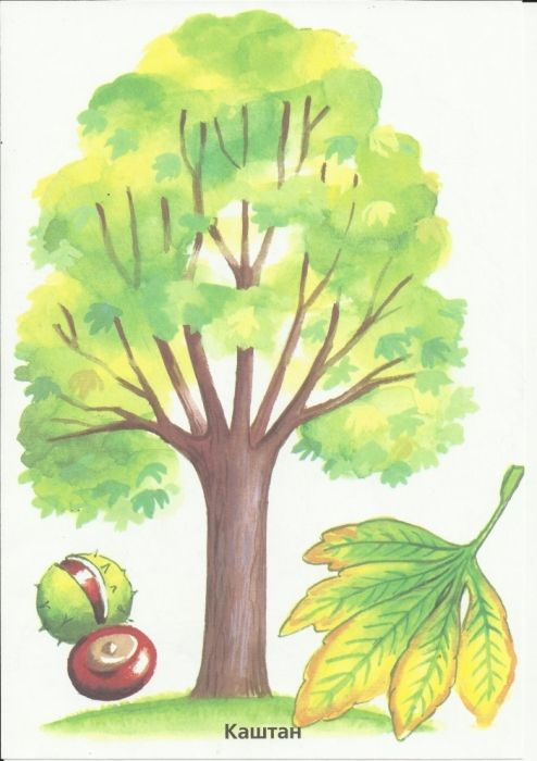 Раскраска Деревья и листья. Обсуждение на LiveInternet ...
