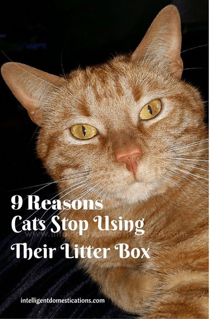 Help For cat training cattraining Cats, Best cat litter