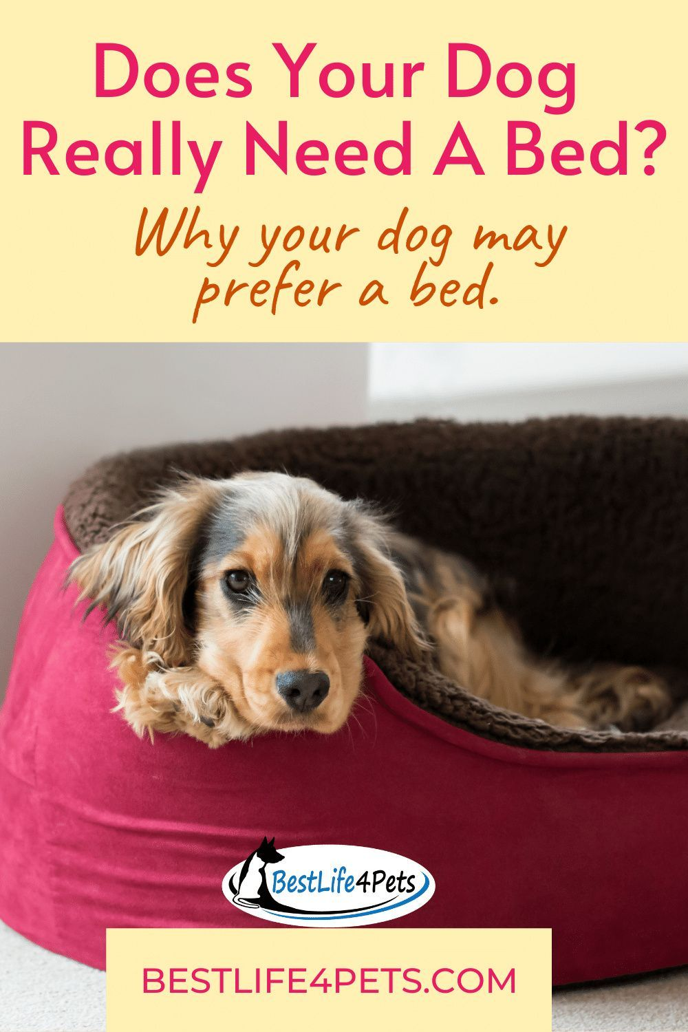 Does Your Dog Really Need A Bed Best Orthopedic Dog Bed Your Dog Pet Care Tips