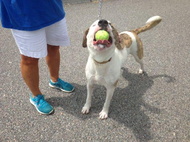 Rubles Virginia Beach Animal Care And Adoption Center 341 S Birdneck Rd 23451 757 385 4444 Pet Care Adoption Animals