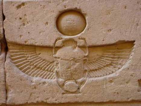 Scarab Scarabeus Beetle The Sacred Beetle Reproduces Itself