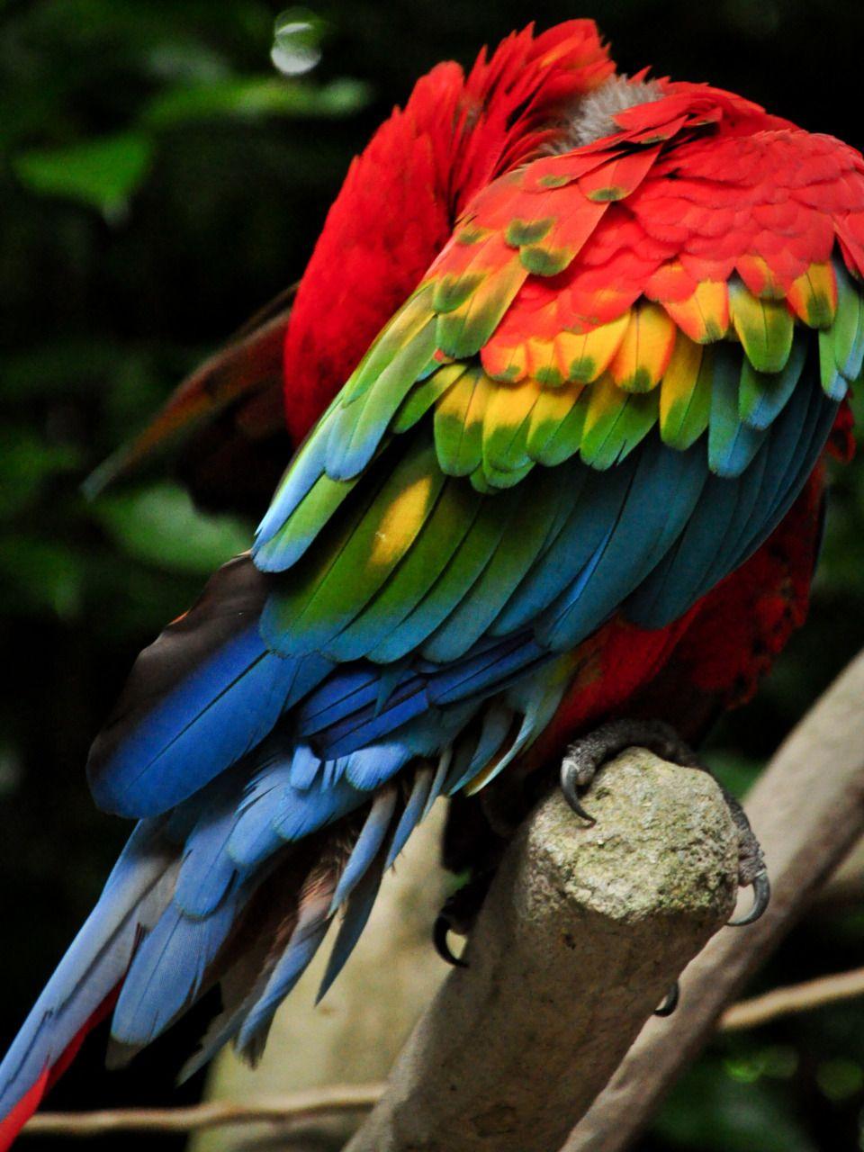 38++ Parrot colours information
