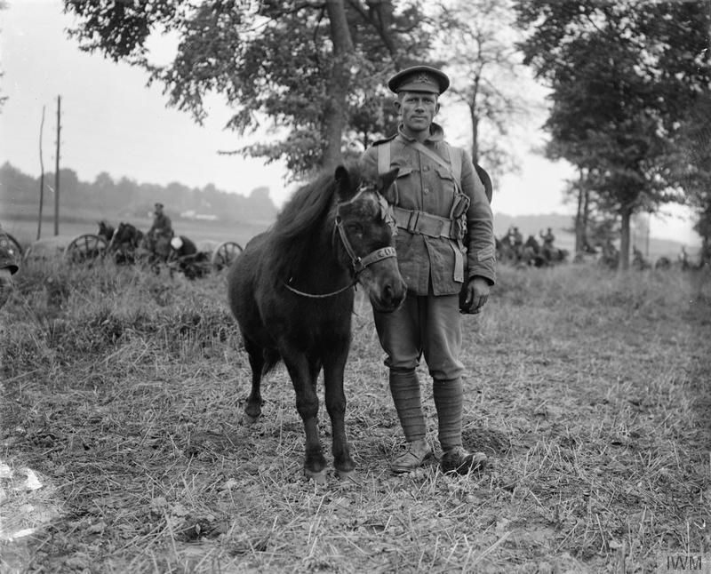 """'Coal-box', a German pony who was found and adopted by troops of the King's Royal Rifle Corps on the Western Front. Albert-Amiens road. September 1916. """""""