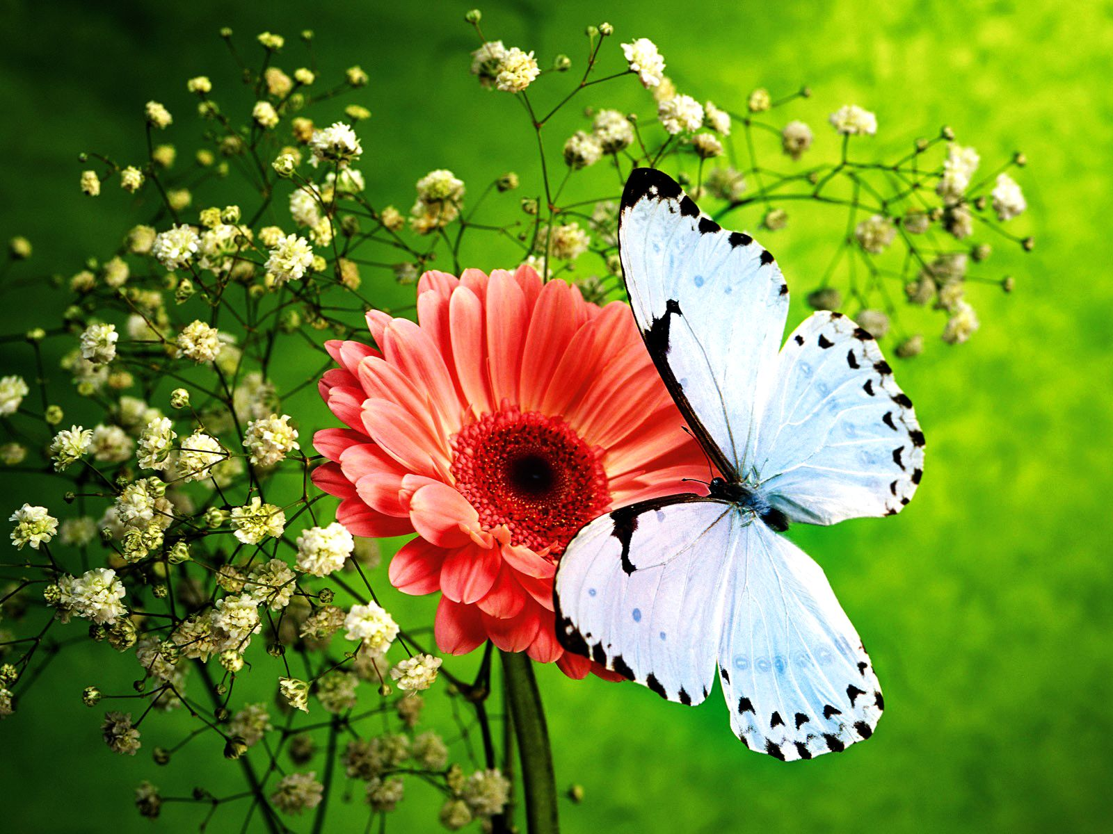 Charmant Flowers And Butterflies | Pink Flower And Beautiful Blue Butterfly