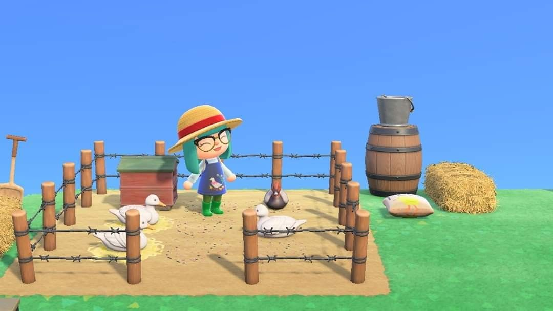 Look At All Those Chickens Animal Crossing Animal Crossing Game New Animal Crossing