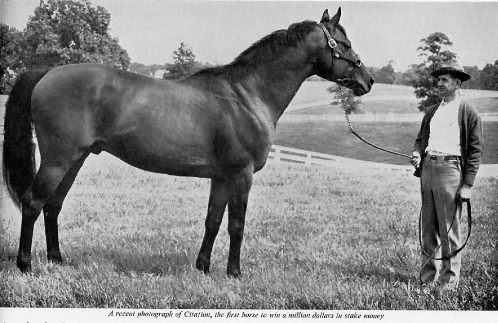 1948 Triple Crown Winner Citation At Stud At Calumet Thoroughbred Horse Racing Horses Beautiful Horses