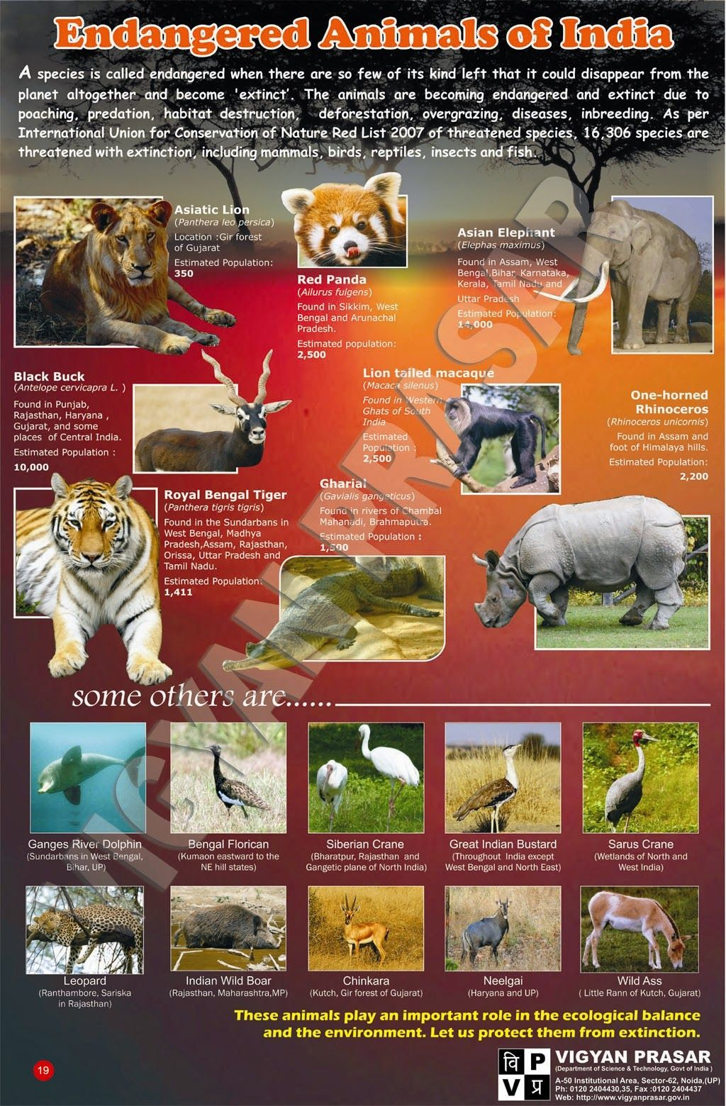Endangered Animals List In India