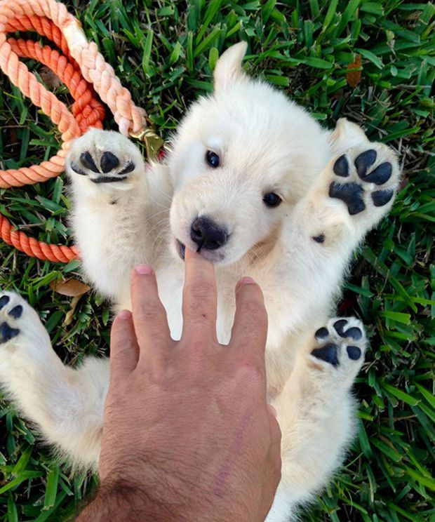 Most Inspiring Teddy Bear Chubby Adorable Dog - f934d521d757573b2abdd76e34e8c7ef  Graphic_532674  .jpg