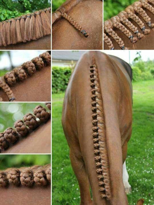 Horse Plaits Pferdemahne Pferde Frisuren Pferdemahnenzopfe